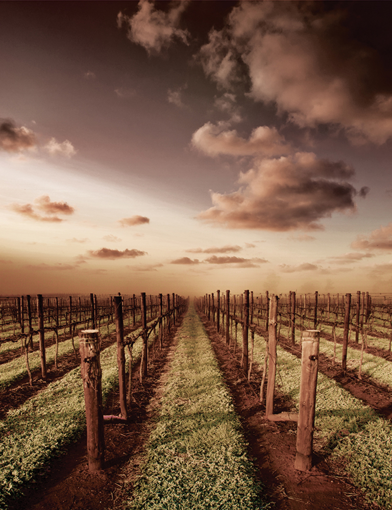 Menzies vineyard?options=resize(height 1040.width 800
