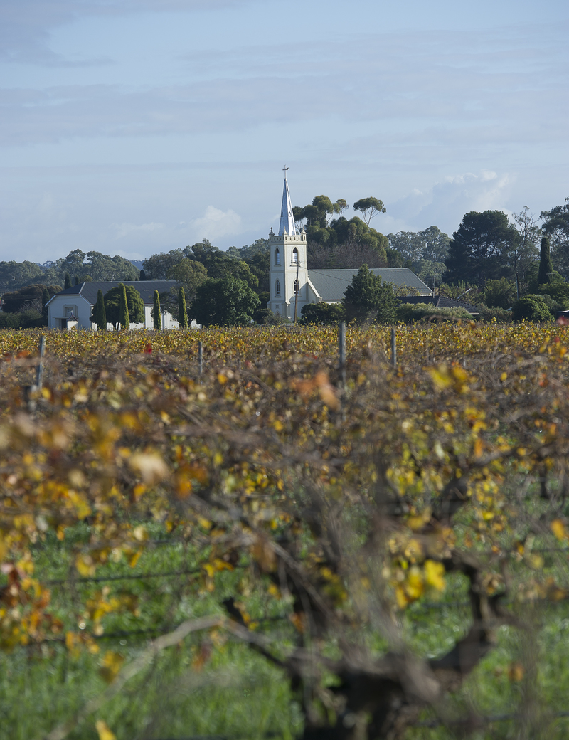 Steeple Vineyard