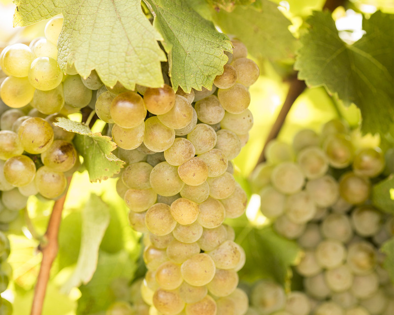 Viognier grape bunch?options=resize(height 640.width 800