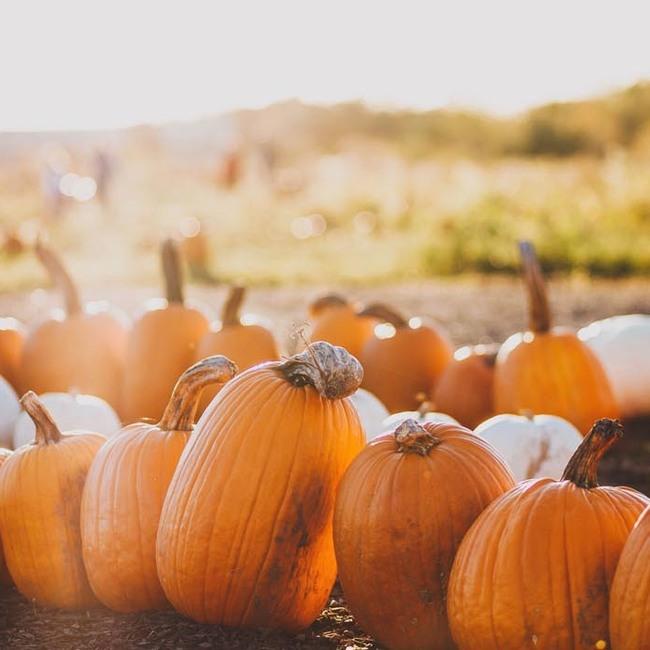 What To Do With Pumpkins